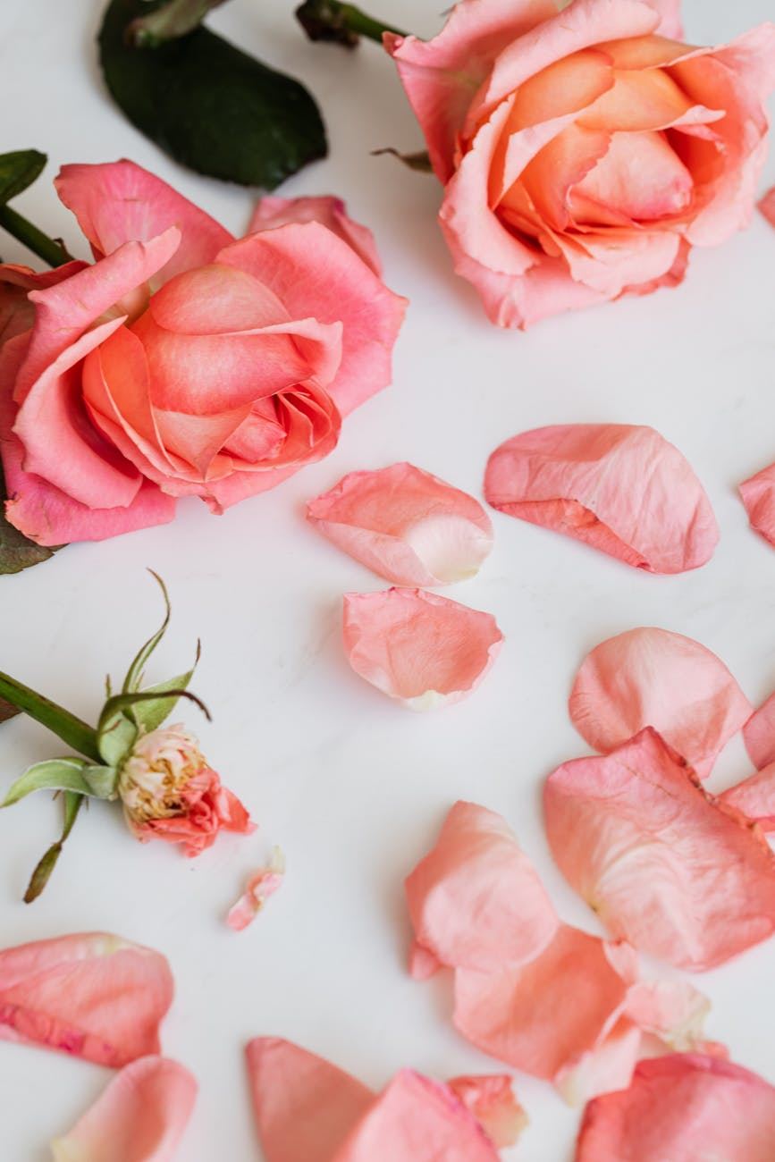 few roses and scattered petals on desktop